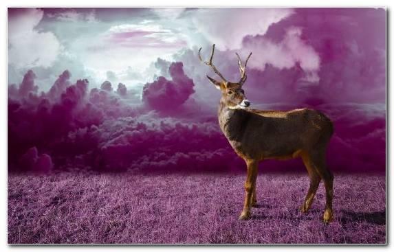 Image Sky Wildlife Antler Grass Deer