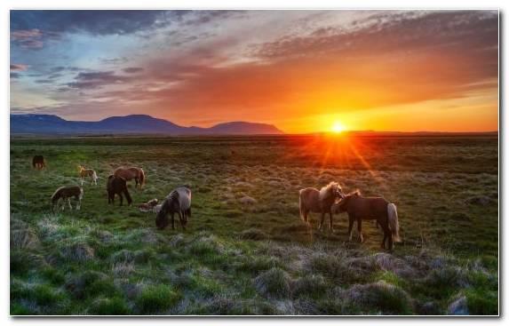 Image Sky Wildlife Ecosystem Grassland Savanna