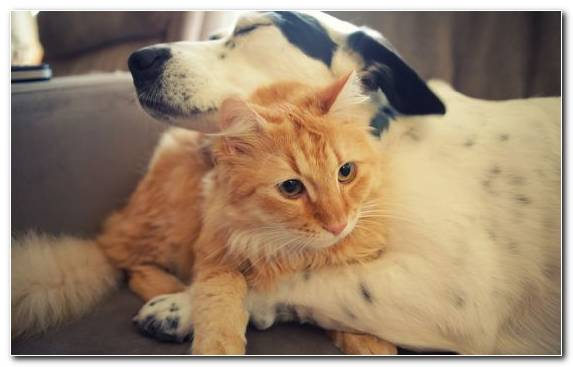 Image Small To Medium Sized Cats Dog Breed Group Dog Kitten Fur