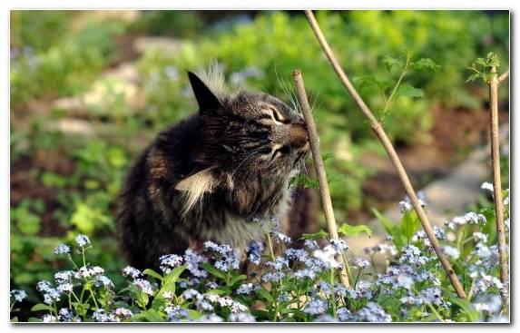 Image small to medium sized cats fauna mammal wildlife plant