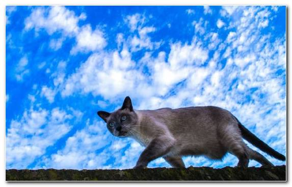 Image Small To Medium Sized Cats Grasses Blue Sky Grass