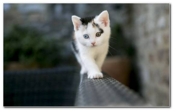 Image Small To Medium Sized Cats Kitten Cat Snout Eye