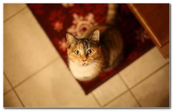 Image Small To Medium Sized Cats Kitten Vertebrate Mammal Snout