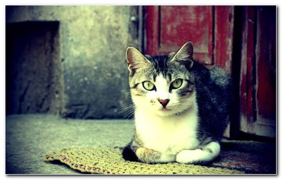 Image Small To Medium Sized Cats Moustache Vertebrate Whiskers Lomography