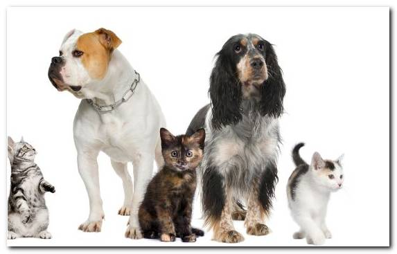 Image Small To Medium Sized Cats Veterinarian Dog Breed Group Dog Breed Whiskers