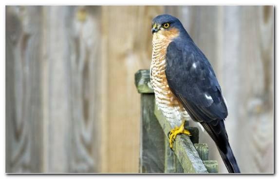 Image Smartphone Owl Beak Wildlife Buzzard