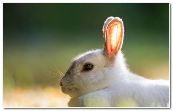 Image Snout Animal Mammal Hare Rabbit