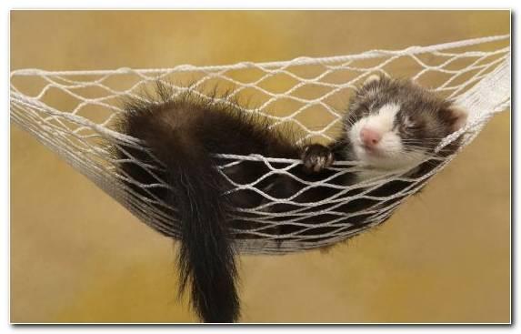 Image Snout Cuteness Fauna Otter Animal Spot