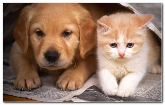 Image snout dog breed kitten cuteness cats and dogs