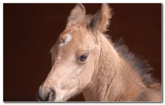 Image Snout Foal Yorkshire Terrier Terrestrial Animal Horse