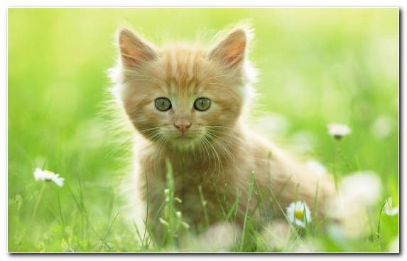 Image Snout Kitten Cuteness Animal Fauna