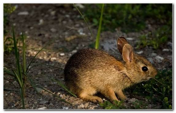 Image snout mammal beige rabbit fauna hare
