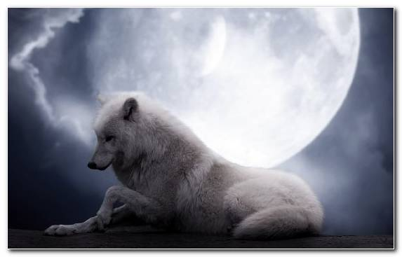 Image Snout Moon Fauna Wildlife