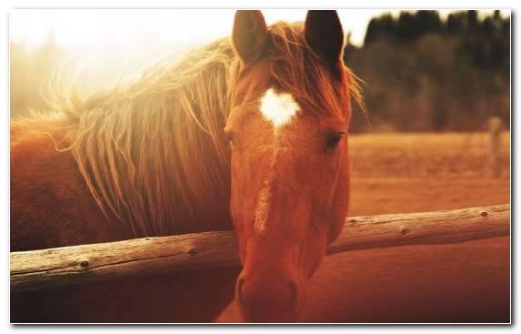 Image Snout Mustang Horse Sunlight Mane Light