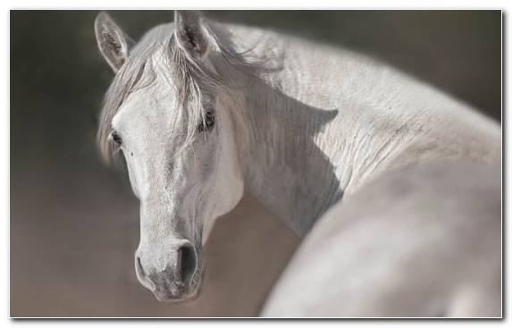 Image Snout Mustang Mare Horse Tack Foal
