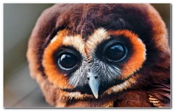 Image Snout Owl Beak Fauna Wildlife