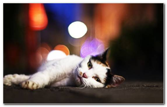 Image Snout Pink Cat Kitten Aegean Cat Whiskers