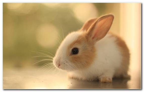 Image Snout Rabbit Cuteness Animal Rabits And Hares