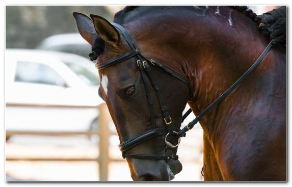 Image Snout Stallion Halter Bridle Horse Harness