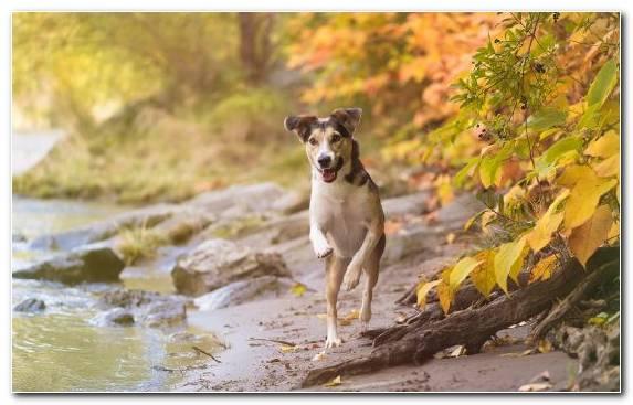 Image Snout Water Plant Street Dog Dog Like Mammal