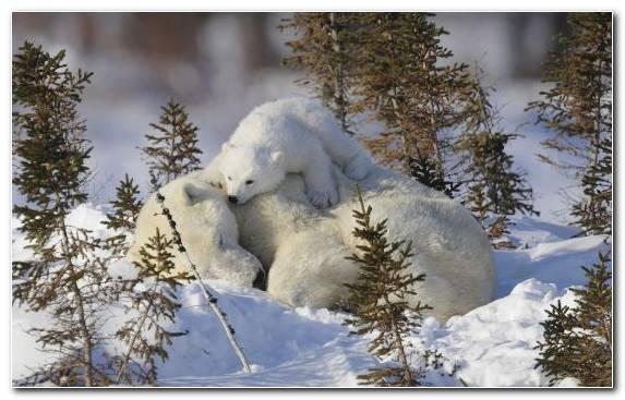 Image snow brown bear freezing wildlife bear