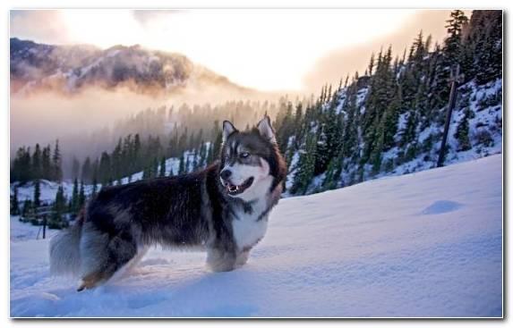 Image snow freezing winter puppy dog breed