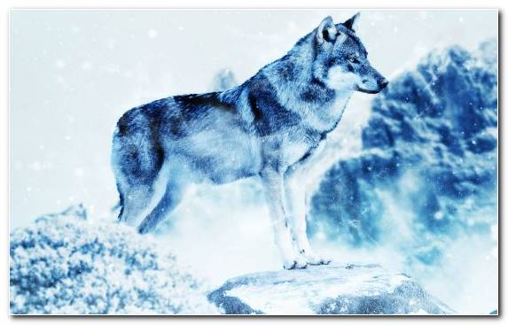 Image snow photoshop sakhalin husky arctic wildlife