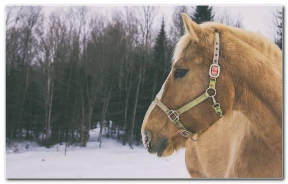 Image snow stallion stock horse winter snout