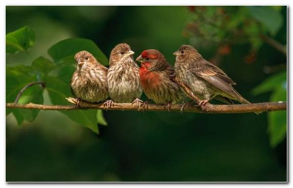 Image Songbird Sparrow Fauna House Sparrow American Goldfinch