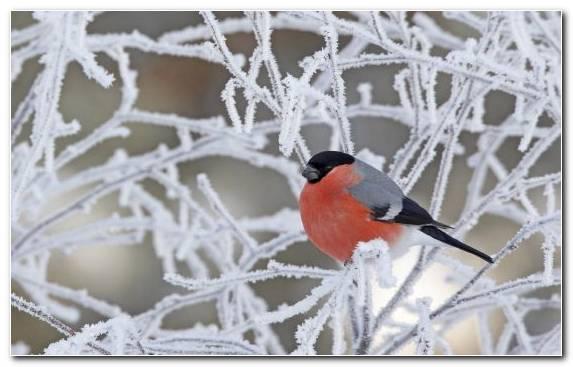 Image Songbird Twig Old World Flycatcher Snow Bird