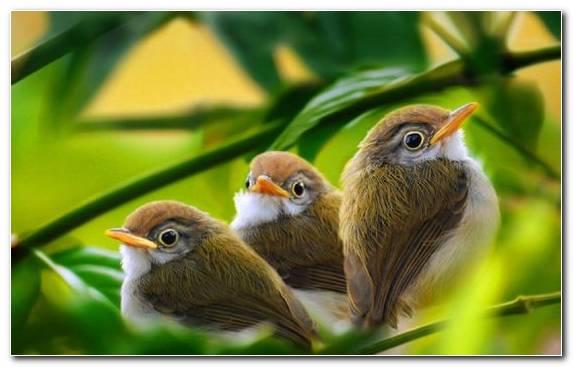 Image Sparrow Wildlife Bird Old World Flycatcher Nightingale