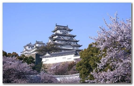 Image Spring Tree Building Sky Cherry Blossom