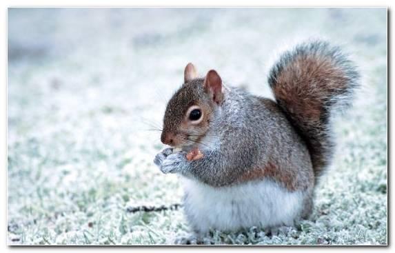 Image squirrel rodent terrestrial animal siberian chipmunk forrests rock squirrel
