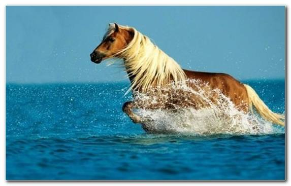 Image Stallion Horse Cat Wild Horse Pet