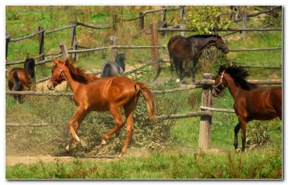 Image Stallion Horse Gait Fauna Wildlife Foal