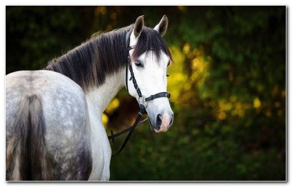 Image stallion mane woody plant grasses Gray