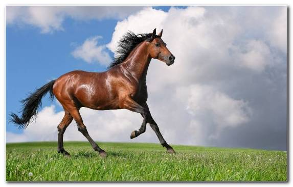 Image Stallion Mustang Horse Bridle Mare Mane