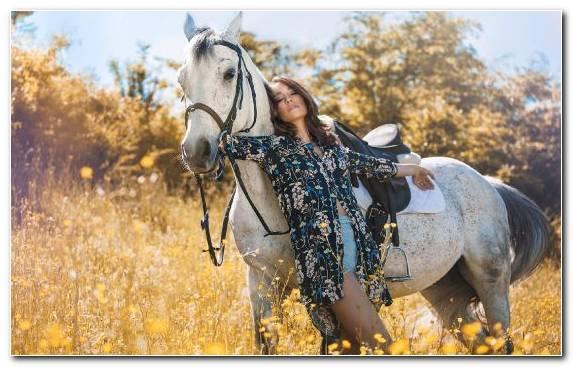 Image Stallion Tree Horse Tack Bridle Rein