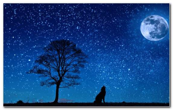 Image Star Moon Night Tree Sky