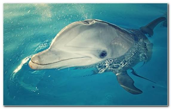 Image Stenella Dolphin Water Marine Mammal Fauna