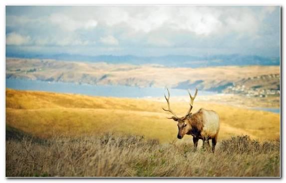 Image Steppe Elk Sky Ecoregion Tundra
