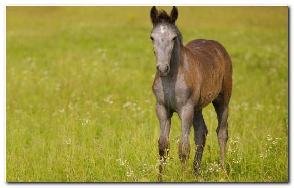 Image steppe foal mare ecosystem stallion