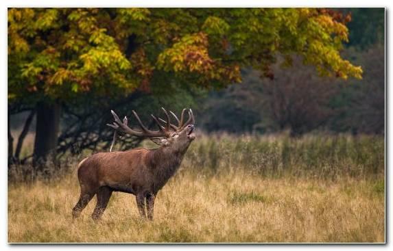 Image sticker wilderness elk grasses wildlife