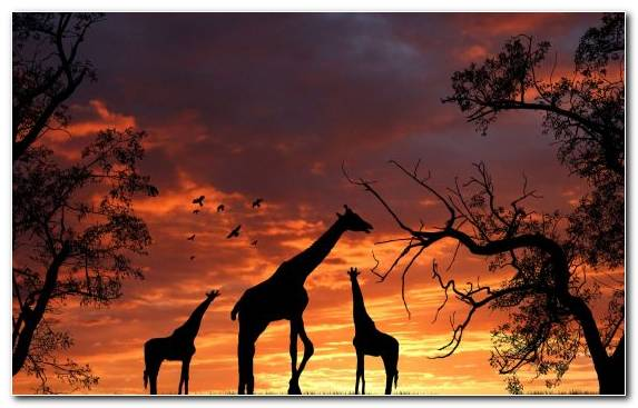 Image Stock Illustration Ecosystem Nature Wildlife Sunset