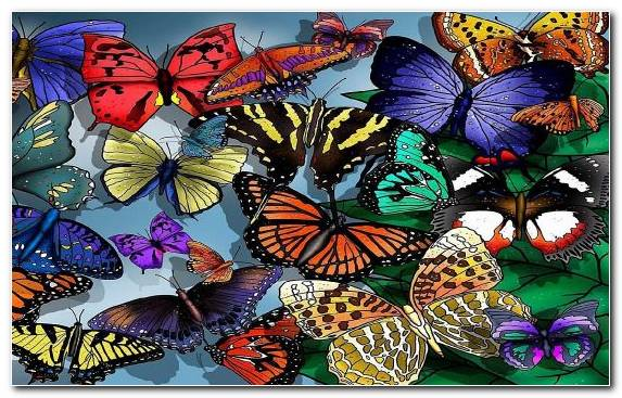Image stock illustration pollinator brush footed butterfly monarch butterfly symmetry