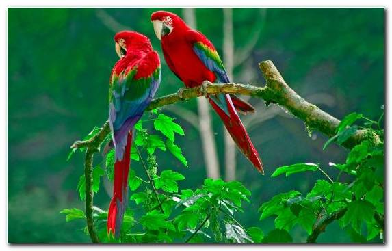Image sulphur crested cockatoo Cockatoo macaw perico bird