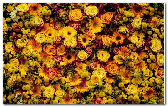 Image Sunflower Cut Flowers Flower Arranging Spring Flower