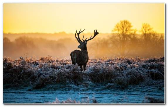 Image Sunlight Deer Antler Wildlife Morning