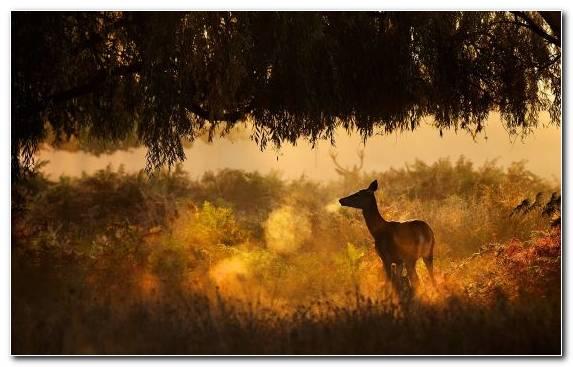 Image Sunlight Ecosystem Grasses Desert Grazing