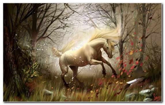 Image Sunlight Tree Horses Mane Grass